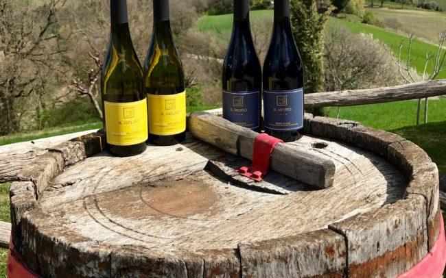 Il Gelso and Il Moro wines La Corte del Gusto